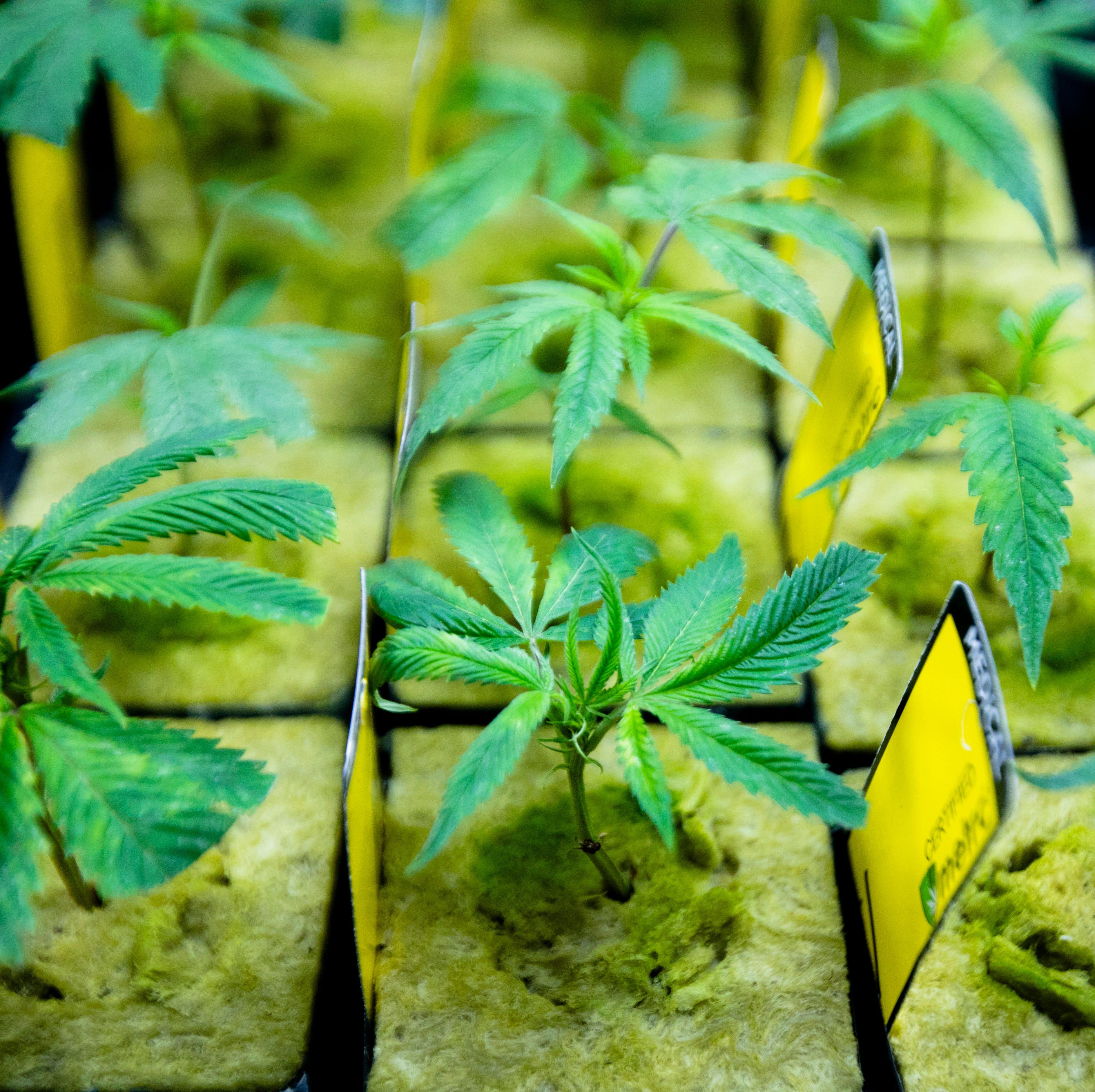 Cincinnati councilman proposes lower limit on how much marijuana Cincinnati will permit