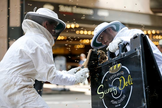 Executive sous chef Mallory Myers, left, and executive chef George Zappas, both of The Orchids at Palm Court/Hilton Netherland Plaza capture thousands of bees on Vine Street, outside of Carew Tower Monday, Oct. 8, 2018. Zappas said they caught between 10,000-12, 000 bees and that the bees did not belong to their hive at the Hilton but will add them.