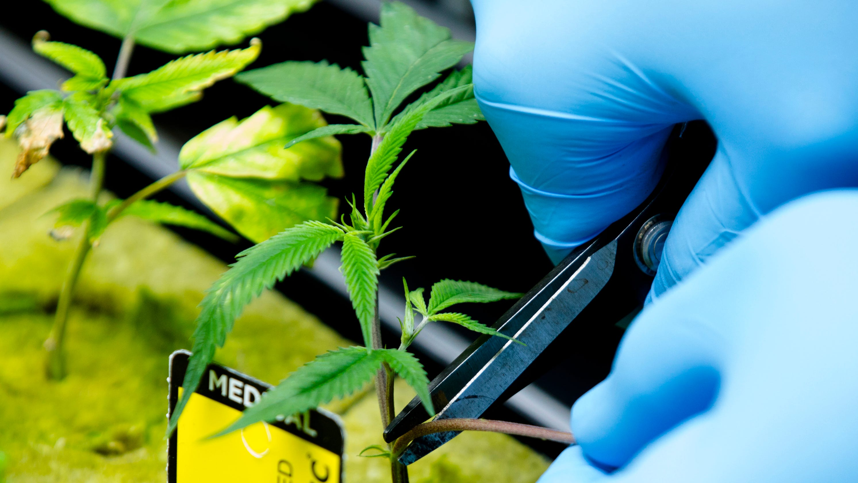 Medical Marijuana: Oils Pulled From Ohio Shelves Over Label