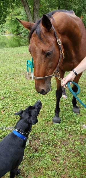 Dog and horse meet during the Animal Initiative Committe's Celebration of Animals Sunday at Leland Avenue Park in Plainfield.