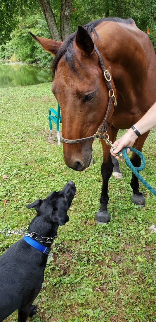 Blessing Dog And Horse
