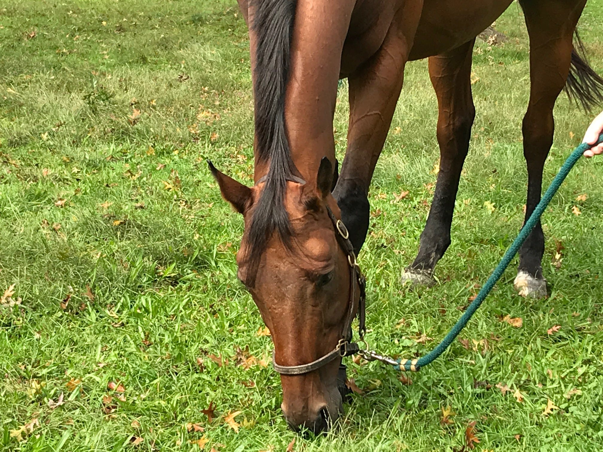 This horse munches on grass during  Sunday's Animal Initiative Committee's Celebration of Animals at Leland Avenue Park in Plainfield.