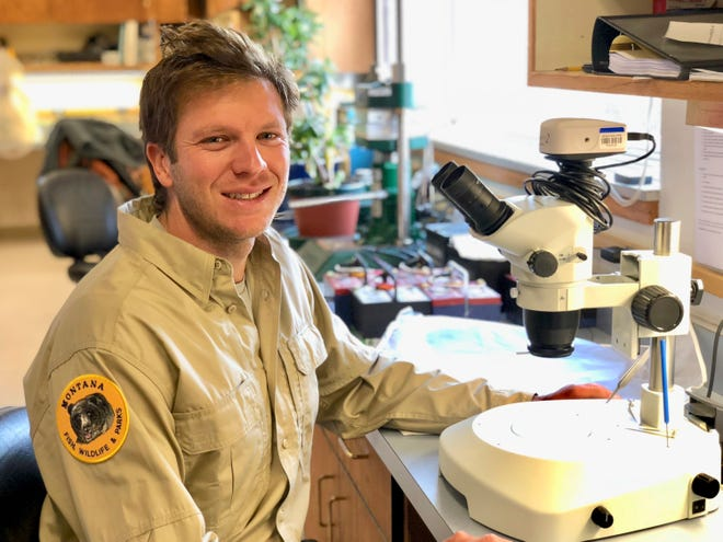 Sam Bourret, a fisheries biologist with Montana Fish, Wildlife and Parks fisheries, works at the agency's fisheries lab in Kalispell, Mont. Bourret's research in identifying the source of illegally introduced fish will be featured in the November edition of a Canadian aquatic sciences journal.