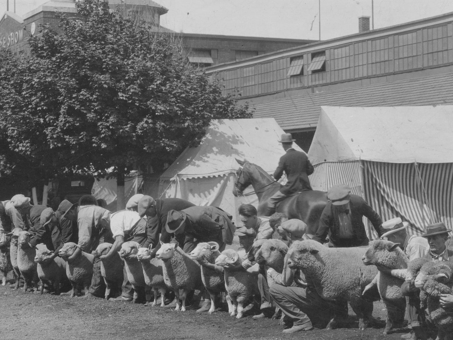Ram showing at the 1927 Indiana State Fair.