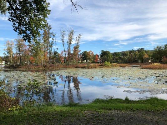 Pond Color Starting Blue Sky Sve Ij