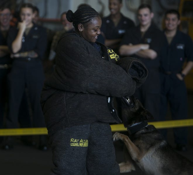 Seaman Kaisha Andrus, a deck department worker, gets bitten while wearing a padded suit during a military working dog demonstration aboard the amphibious assault ship USS Wasp (LHD 1) while underway in the Pacific Ocean, Sep. 19, 2018. Andrus is a native of Lafayette, Louisiana. The 31st MEU uses military working dogs and their handlers for protection and aggression in order to disarm and take down targets when needed. The 31st MEU, the Marine Corps' only continuously forward-deployed MEU, provides a flexible force ready to perform a wide-range of military operations in the Indo-Pacific region.