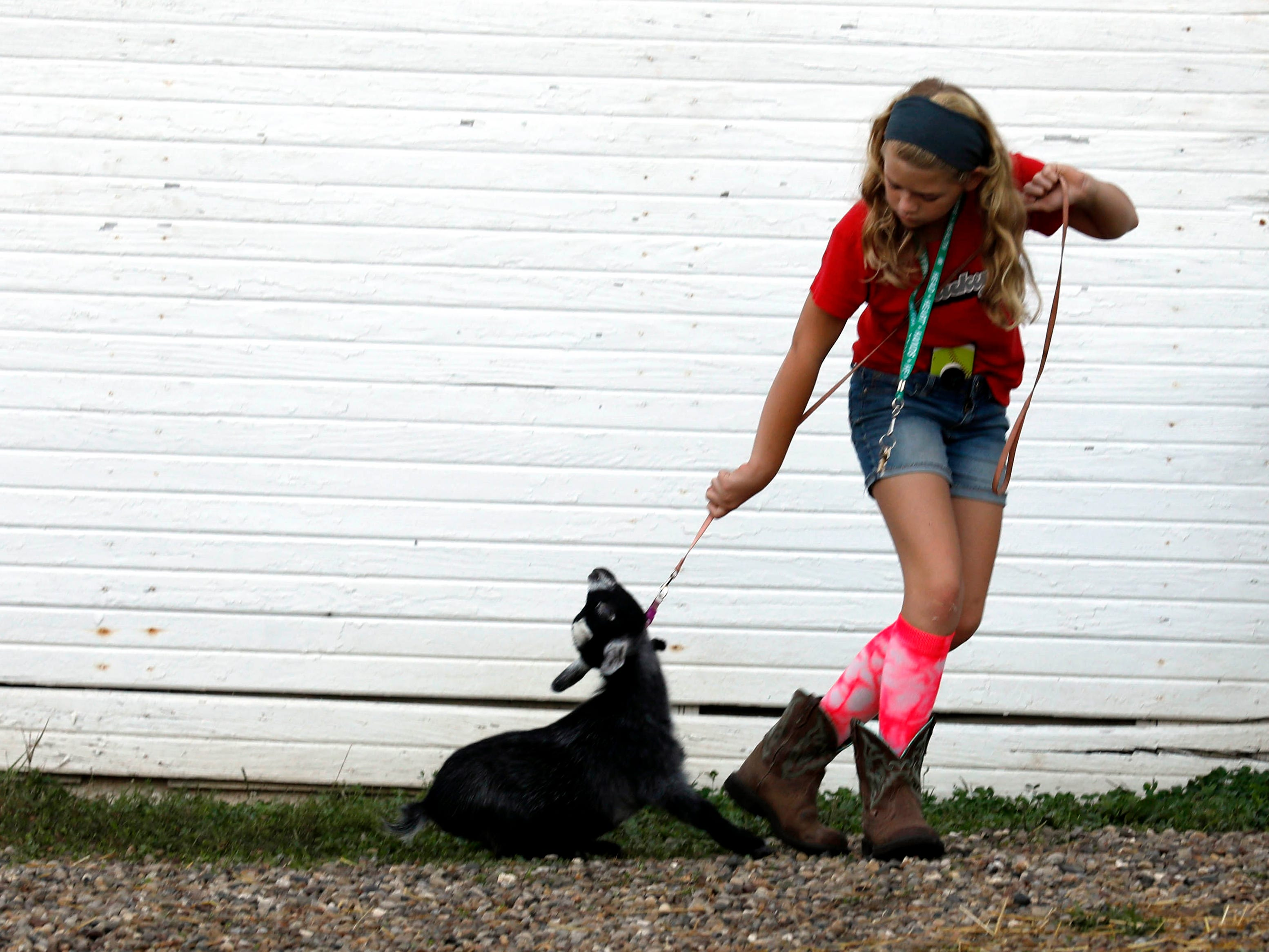 Robyn Rex, from Canal Winchester, tries to coax Rose and seven-month-old pygmy goat Rose, at the Fairfield County Fair in Lancaster.