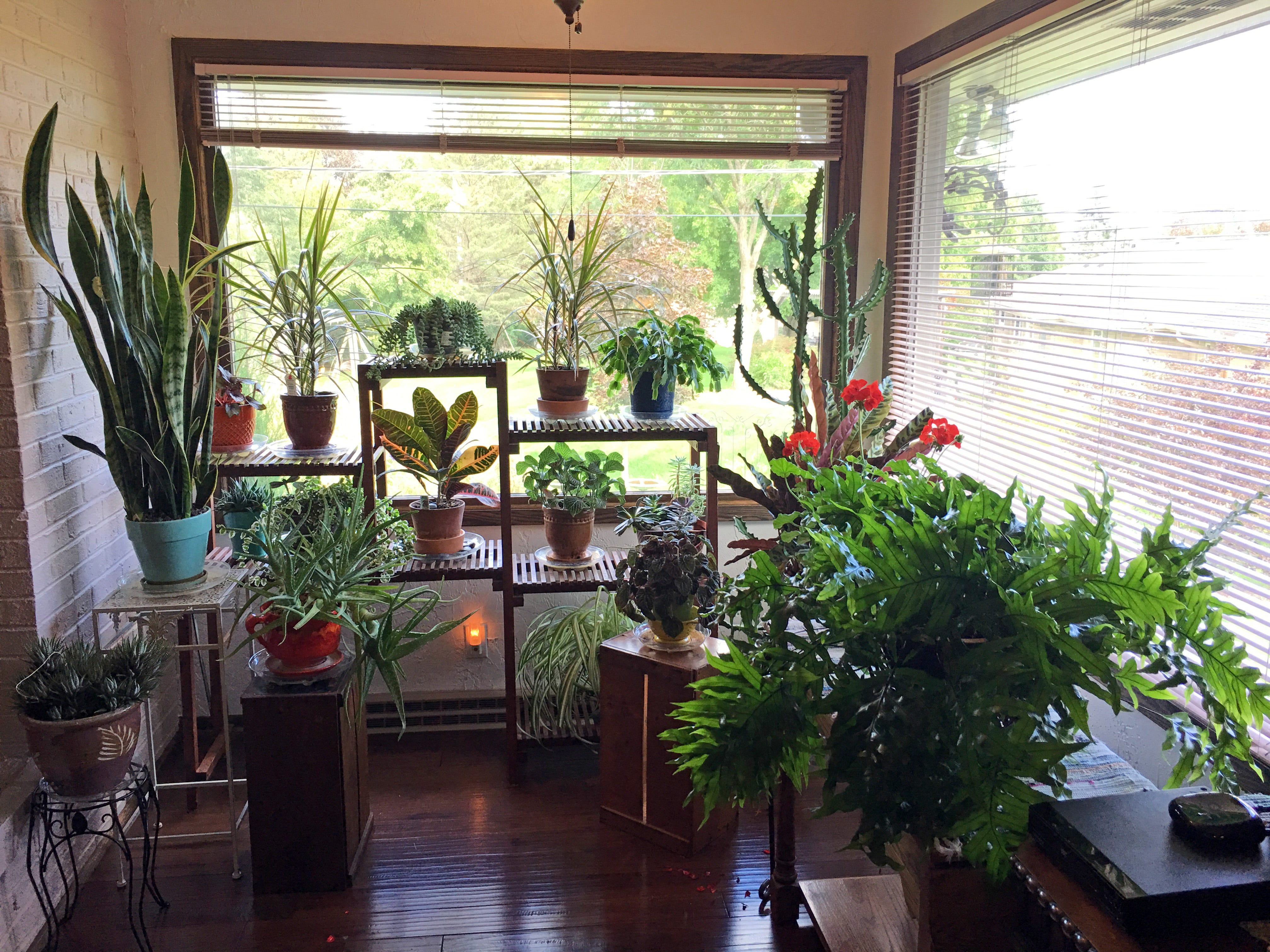 In addition to a wide variety of native plants in her garden beds, Ann Sheahan has many indoor potted plants that she puts outdoors for the summer. She recently brought them into her three-season room for the winter.