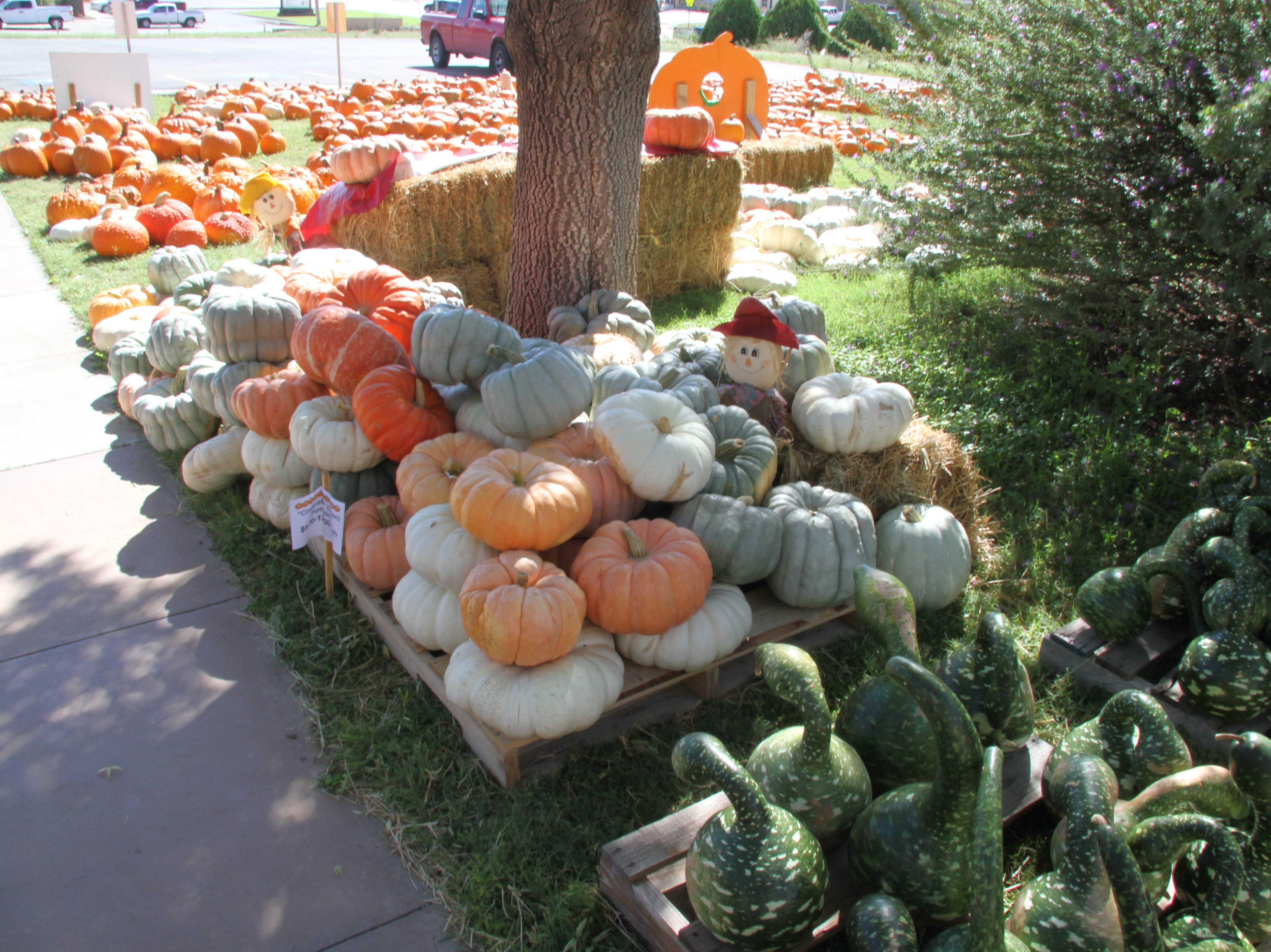 One can tell its fall in Carlsbad as St. Peter Lutheran Church at 1302 W. Pierce is hosting its 14th annual pumpkin patch. The pumpkins are grown by the Navajo Nation in Farmington.