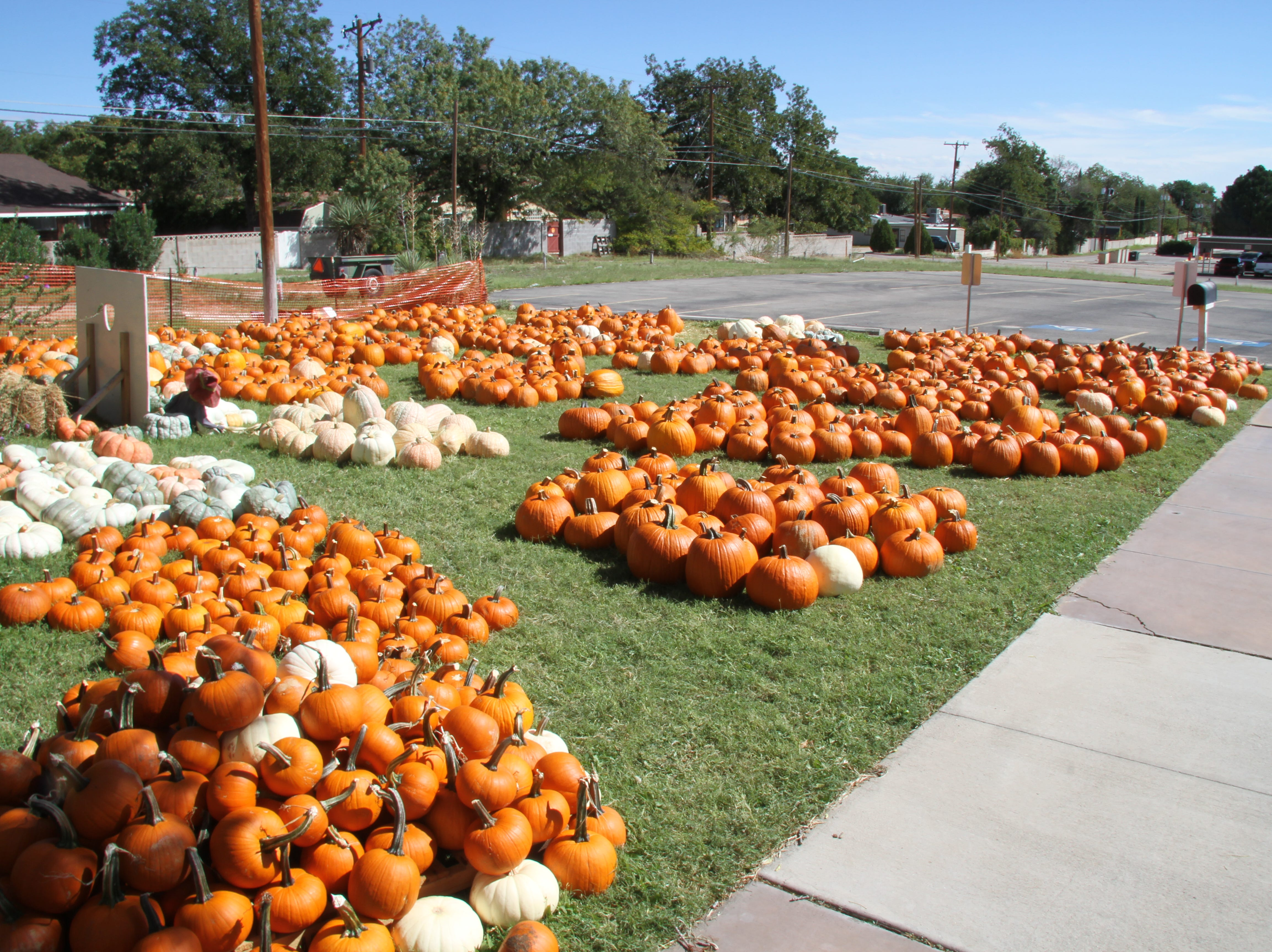 A Carlsbad favorite is back for another year. St. Peter Lutheran Church at 1302 W. Pierce is hosting its 14th annual pumpkin patch.  Over 650 volunteer hours go into running the event.