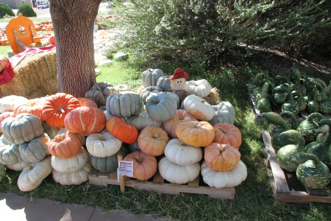 Pumpkins and gourds await the public during the 14th annual St. Peter Lutheran Church Pumpkin Patch. The church is located at 1302 W. Pierce and the public can stop by Monday through Sunday until Oct. 31.