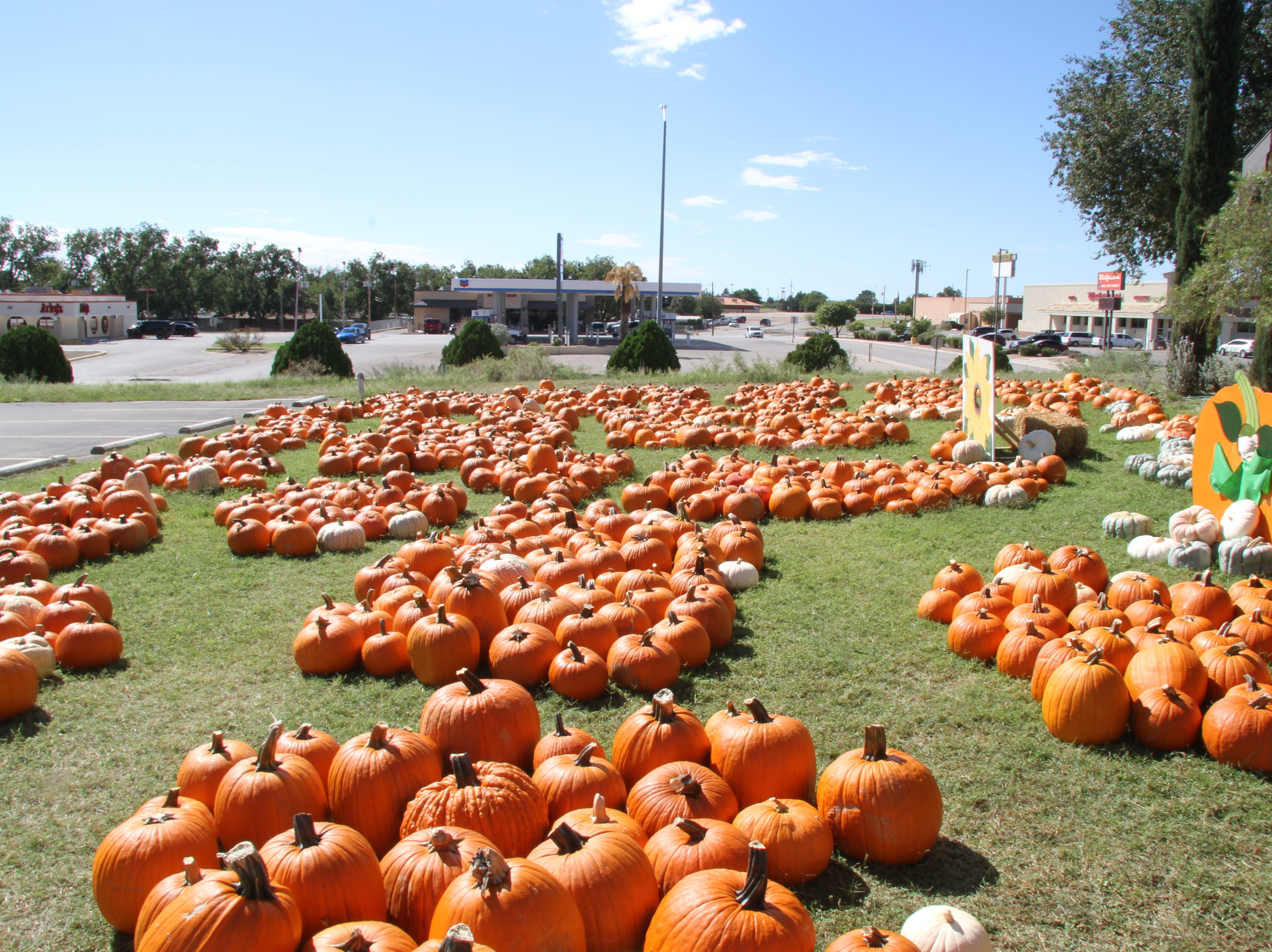St. Peter Lutheran Church is covered with pumpkins from now until Oct. 31. This year's proceeds go to Packs for Hunger and the Children's Advocacy Center-Buddies Program. The church is located at 1302 W. Pierce.