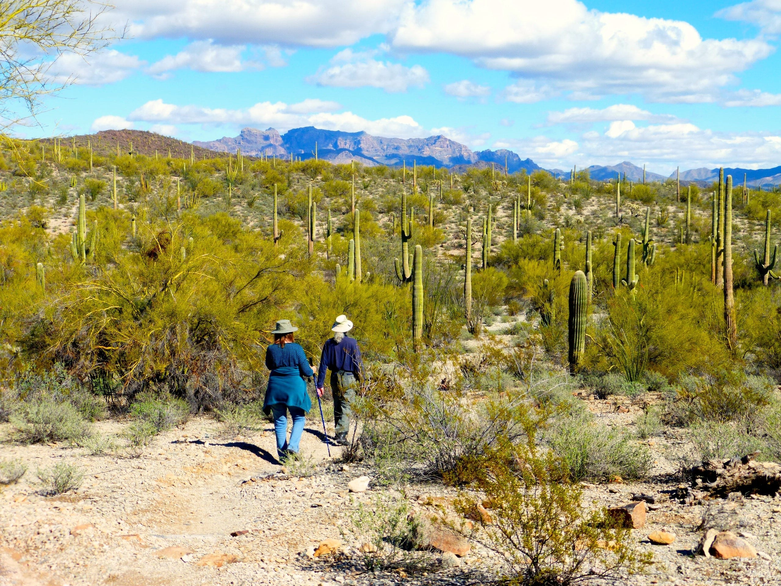 The town of Why sits near the northern border of Organ Pipe Cactus National Monument.