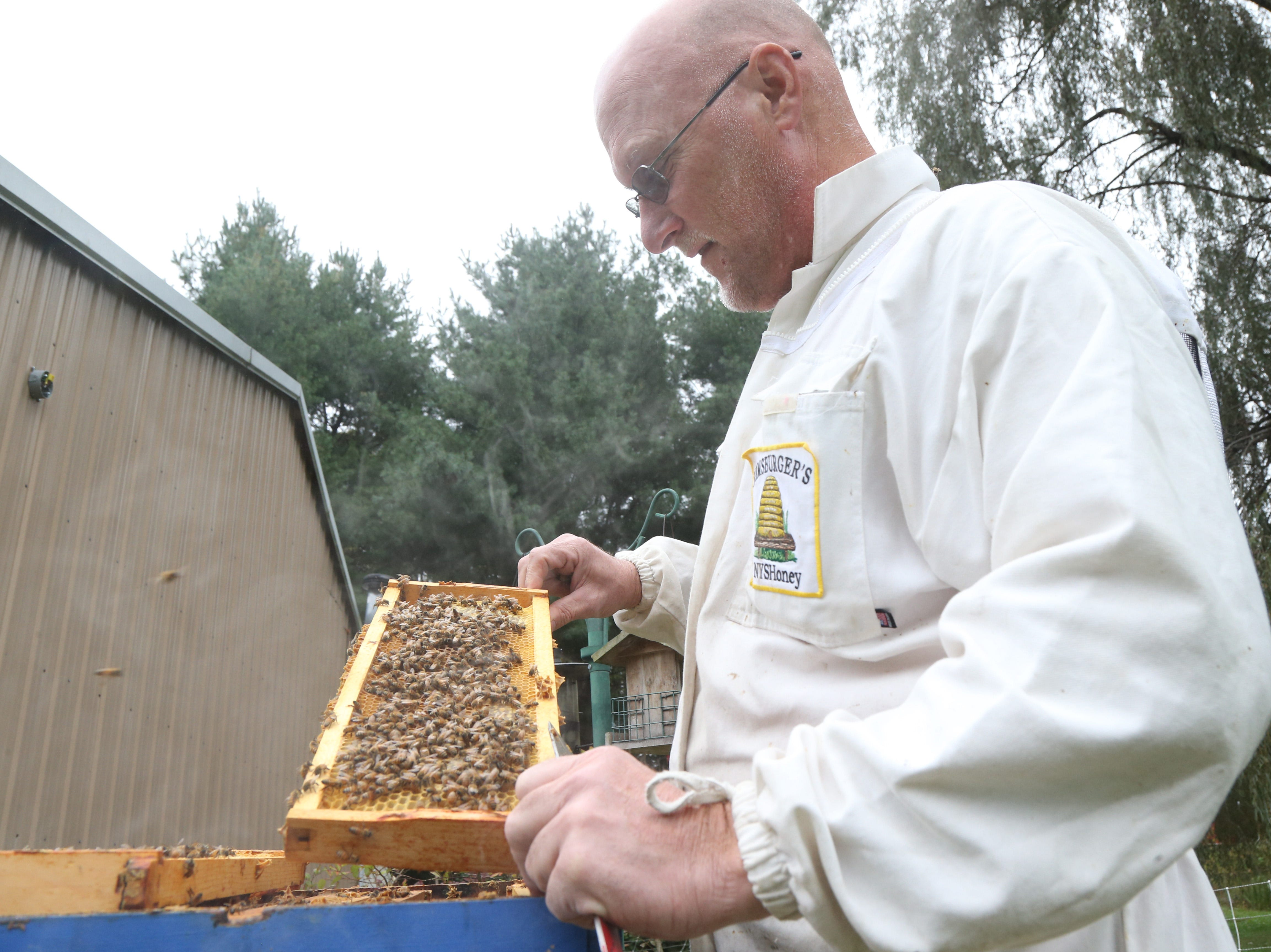 Dennis Remsburger inspects a frame from a beehive at his home in Pleasant Valley on October 8, 2018. The Remsburgers have beehives throughout the Hudson Valley, and currently have the single hive at their home.