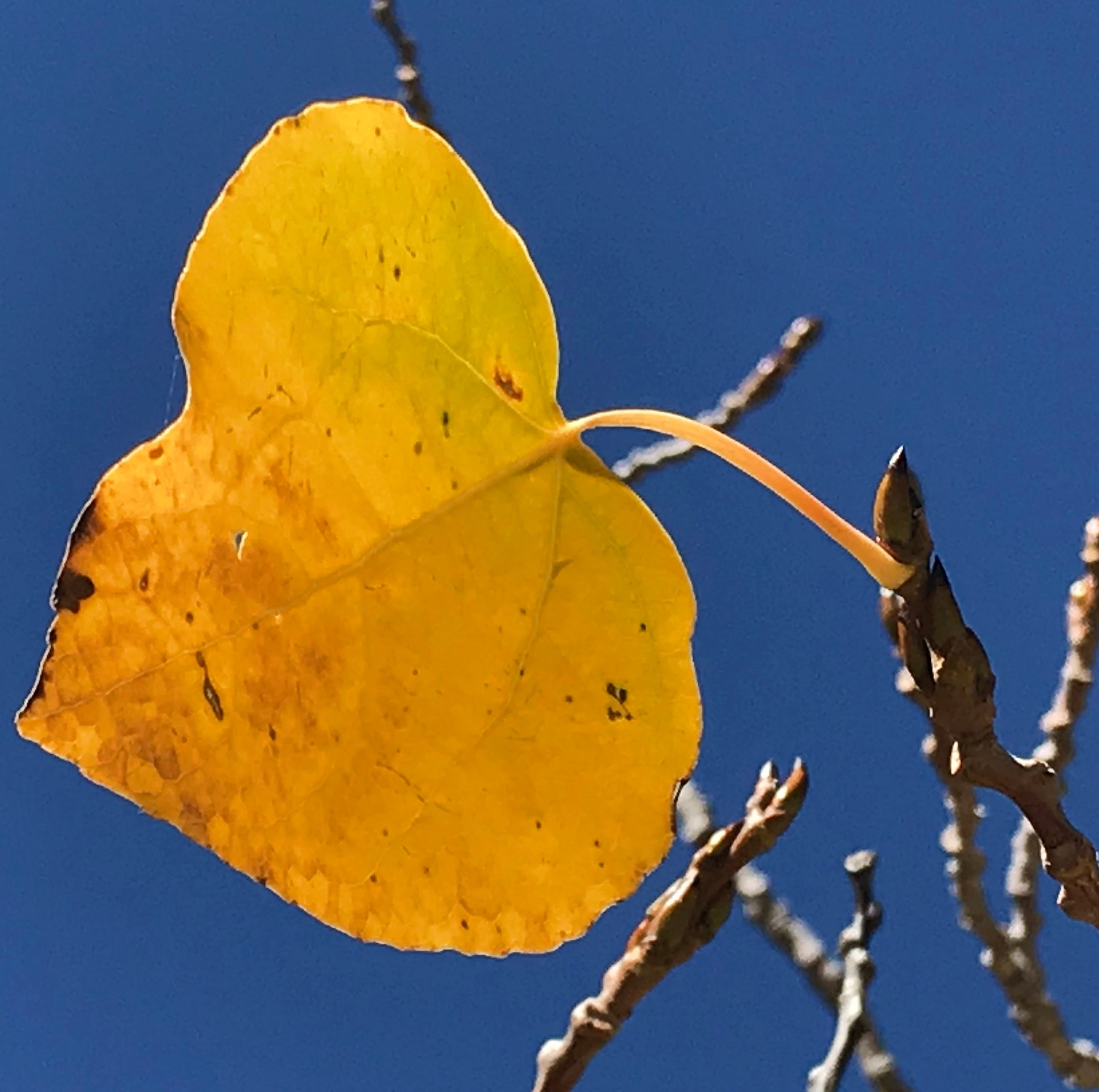 Where to see fall leaves near Reno: Map of fast, easy family drives