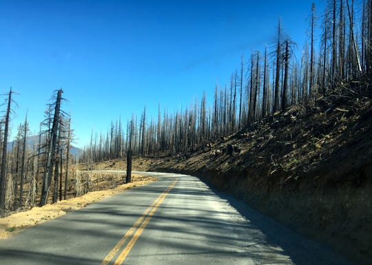 Views of the Milli Fire scar along McKenzie Pass Highway 242.
