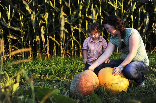 Caleb Severs, 2, and mother Tiffany Severs check out their pumpkins as they wait for a wagon to carry them away at Middle River Farms on Sunday, Oct. 6, 2013, in Grottoes.
