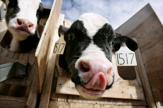 Ap Cattle Rustling A Usa Id