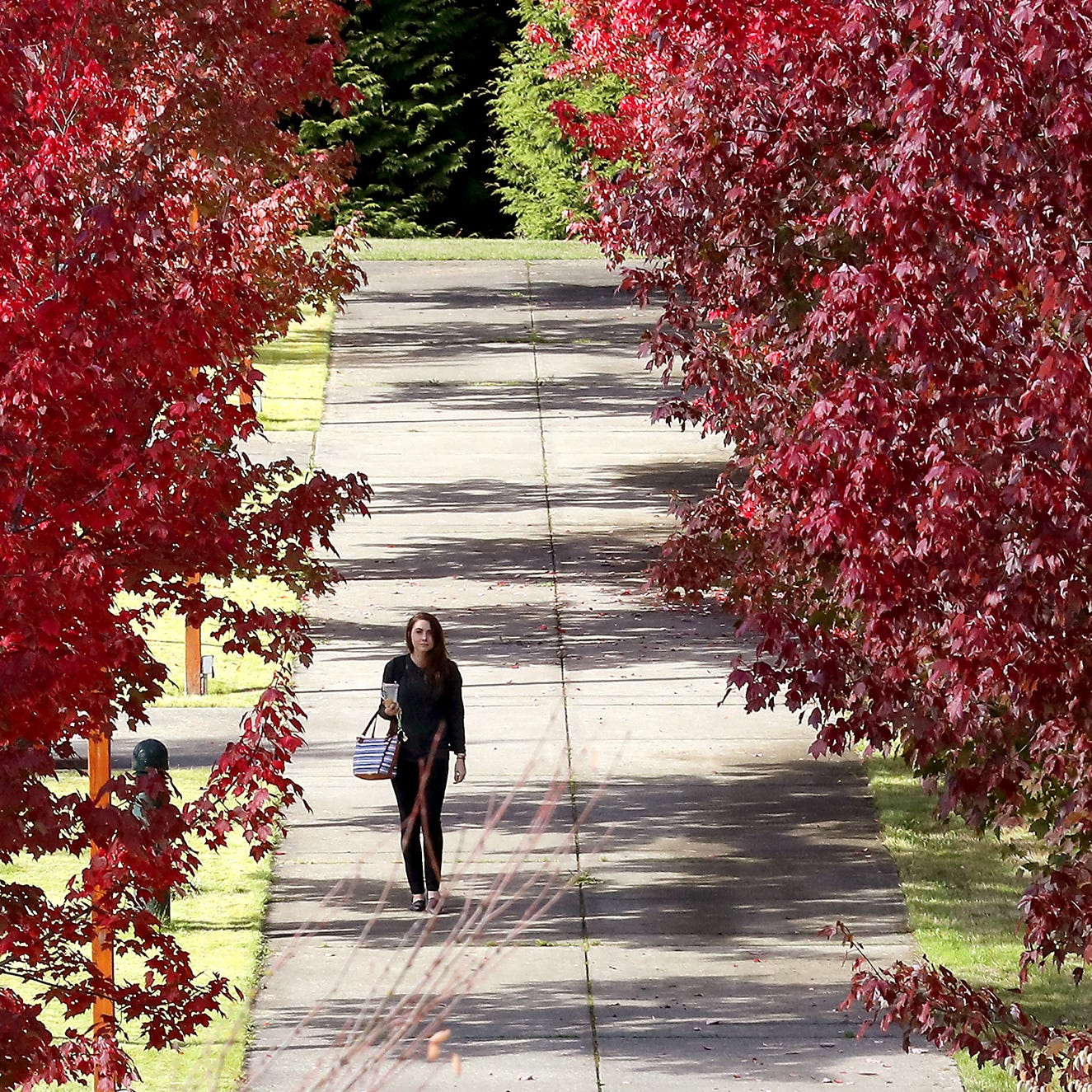 Olympic College students feeling the pinch from delayed GI Bill benefit payments