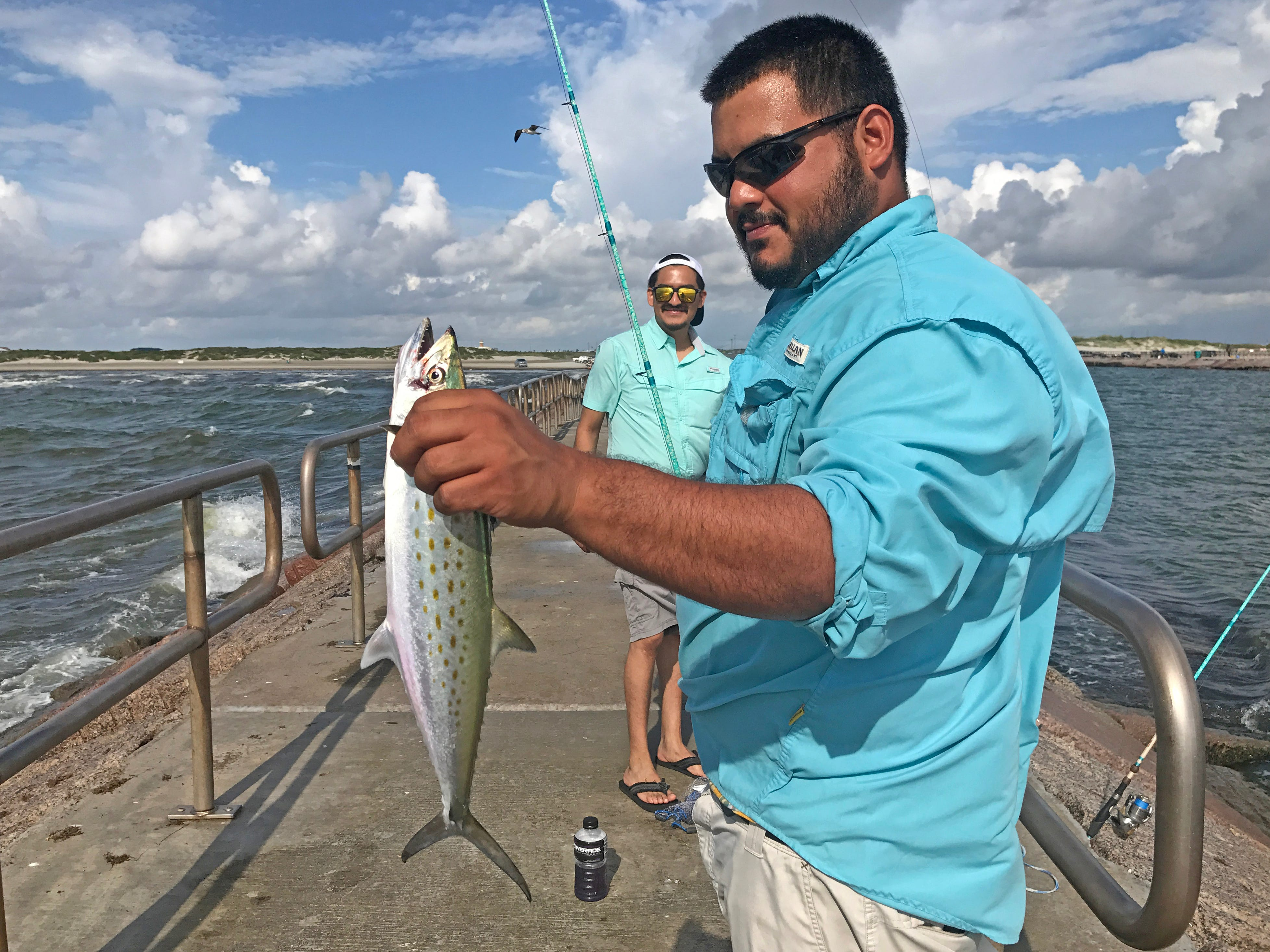 One of several Spanish mackerel I saw caught recently on the south Packery jetty.