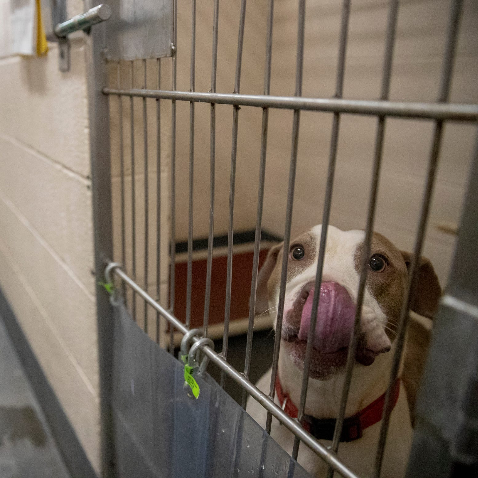 Cages of animals are stacked 10-deep in hallways at Indy Animal Care. They need your help.
