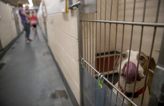 Indianapolis Animal Shelter Near Capacity