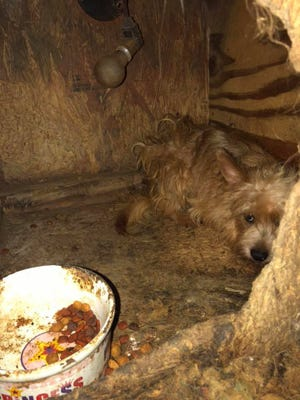 """Rhea County officials rescued more than 100 small dogs from what the animal shelter there called """"the worst puppy mill situation we have ever seen."""""""