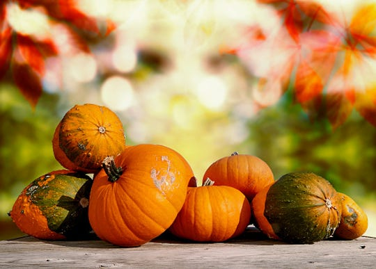 Pumpkins will be available to decorate during the Fort Myers Great Pumpkin Festival this weekend.