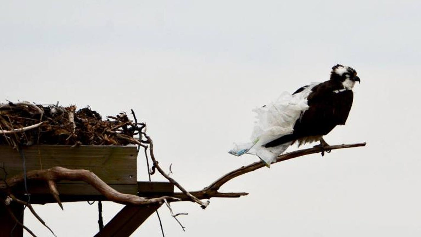 New Jersey needs to ban single-use plastic bags — now | Editorial