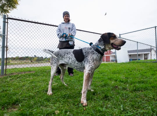Jay, an adult Pointer, poses while being walked by St. Clair County Animal Control volunteer Jody Dicks Thursday, Oct. 4, 2018 at the shelter. Animal Control is introducing an option to renew a dog license every three years, in coordination with your pet's rabies shots.