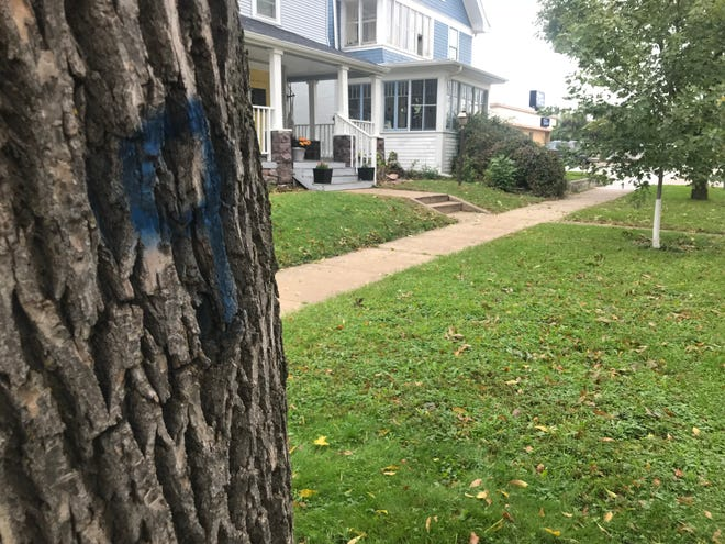 Ash trees growing in Sioux Falls boulevards are being marked with blue 9s by the city of Sioux Falls. City Hall's forestry division will begin cutting down marked trees in January.