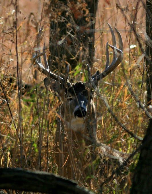 Buck At Squaw Creek