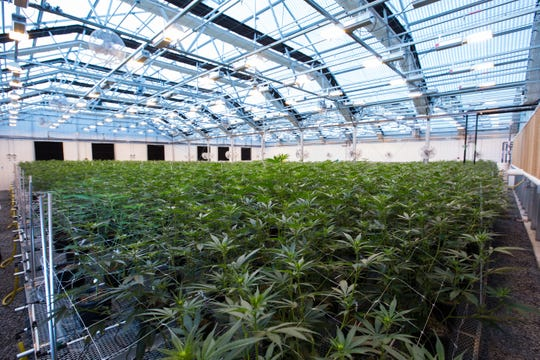 Cultivation center where medical marijuana is grown.