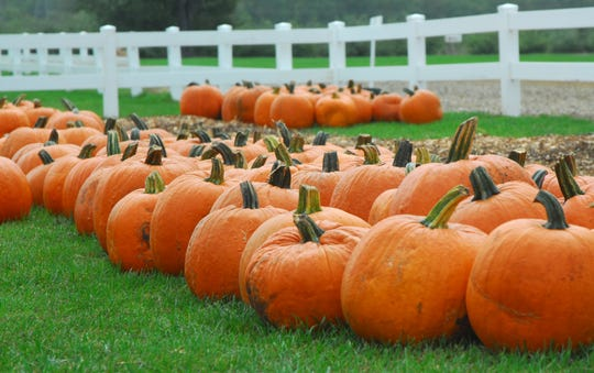 Richland's Gull Meadow Farms is also about pumpkins.