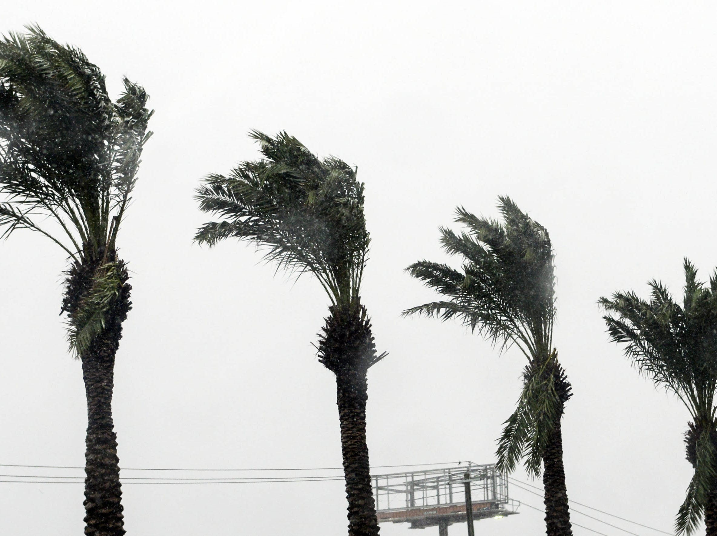 Palm fronds bend in the wind as Hurricane Michael approaches. Mandatory Credit: Craig Bailey/FLORIDA TODAY via USA TODAY NETWORK