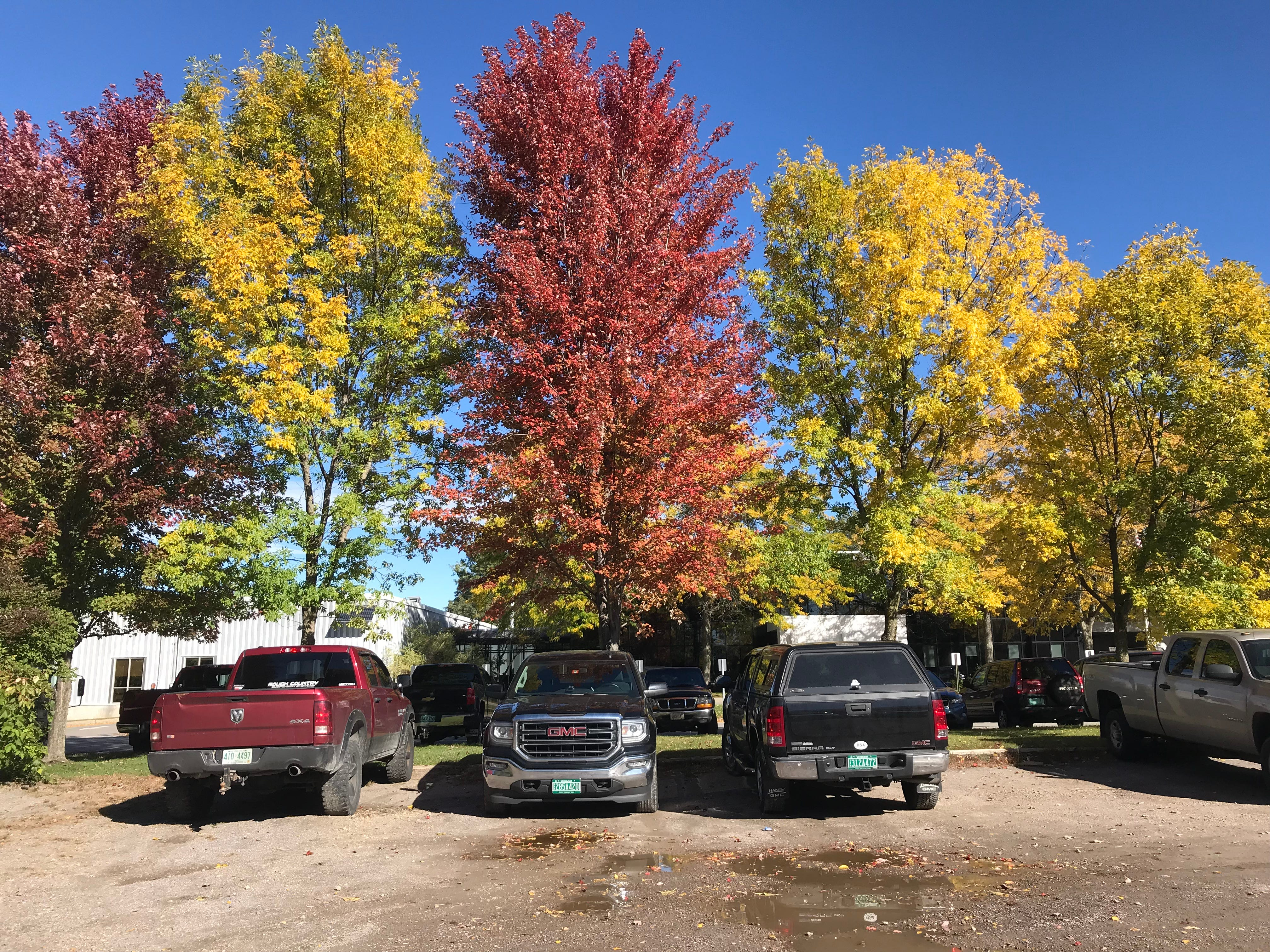 Leaves range from green to gold to deep red at the Burlington Electric Department parking lot on Oct. 5, 2018.