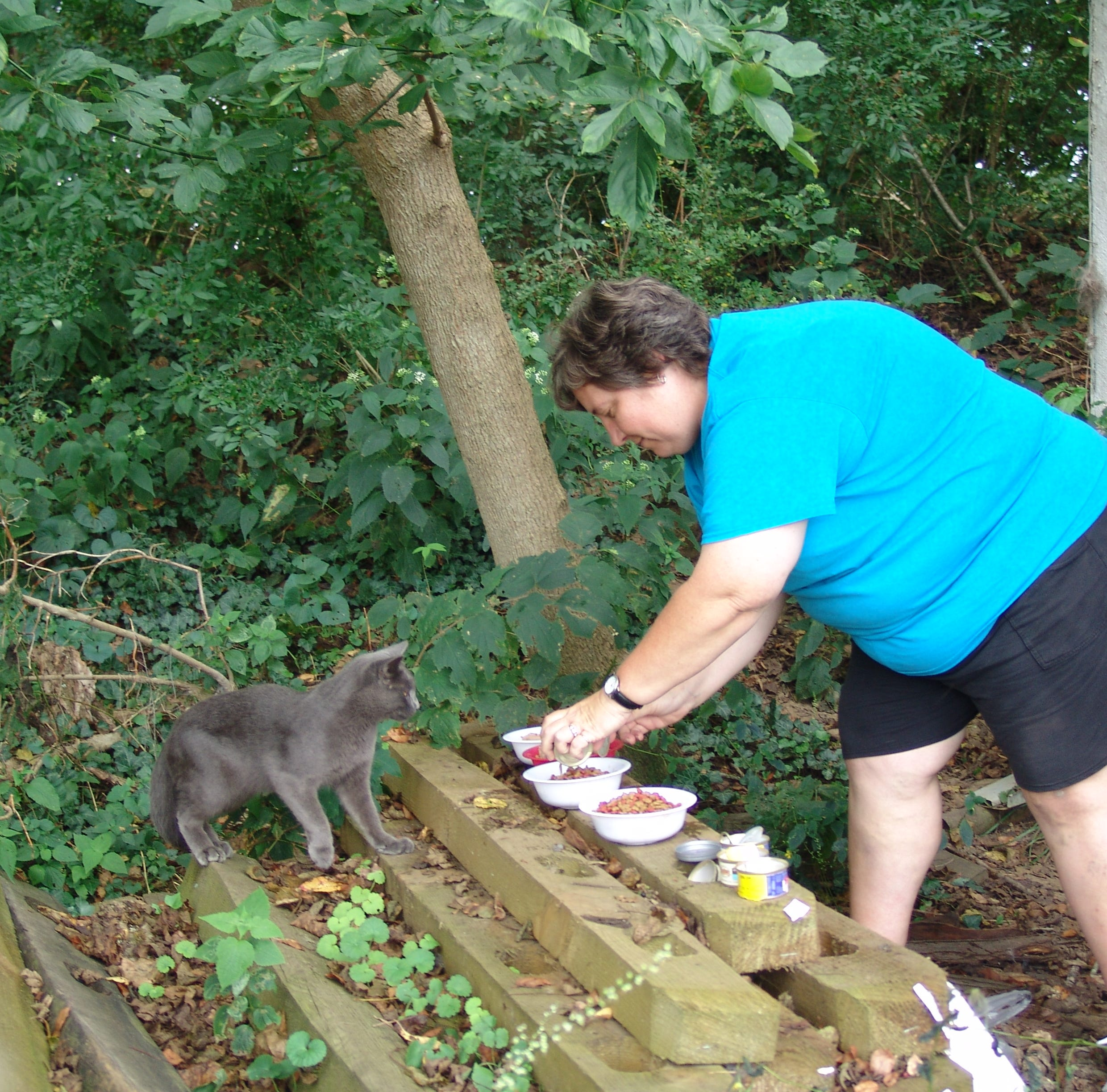 Humane solution for feral cats in Coshocton County