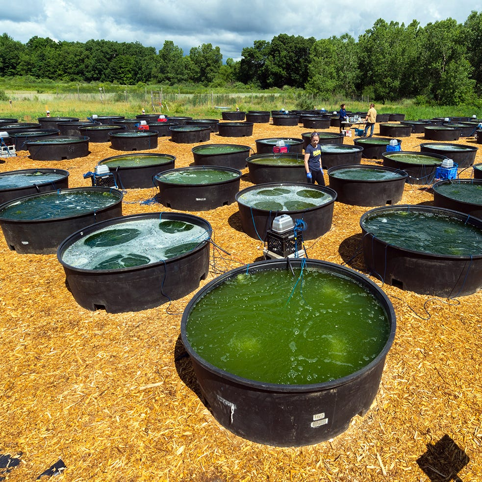 University of Michigan researchers to use algae to make diesel fuel