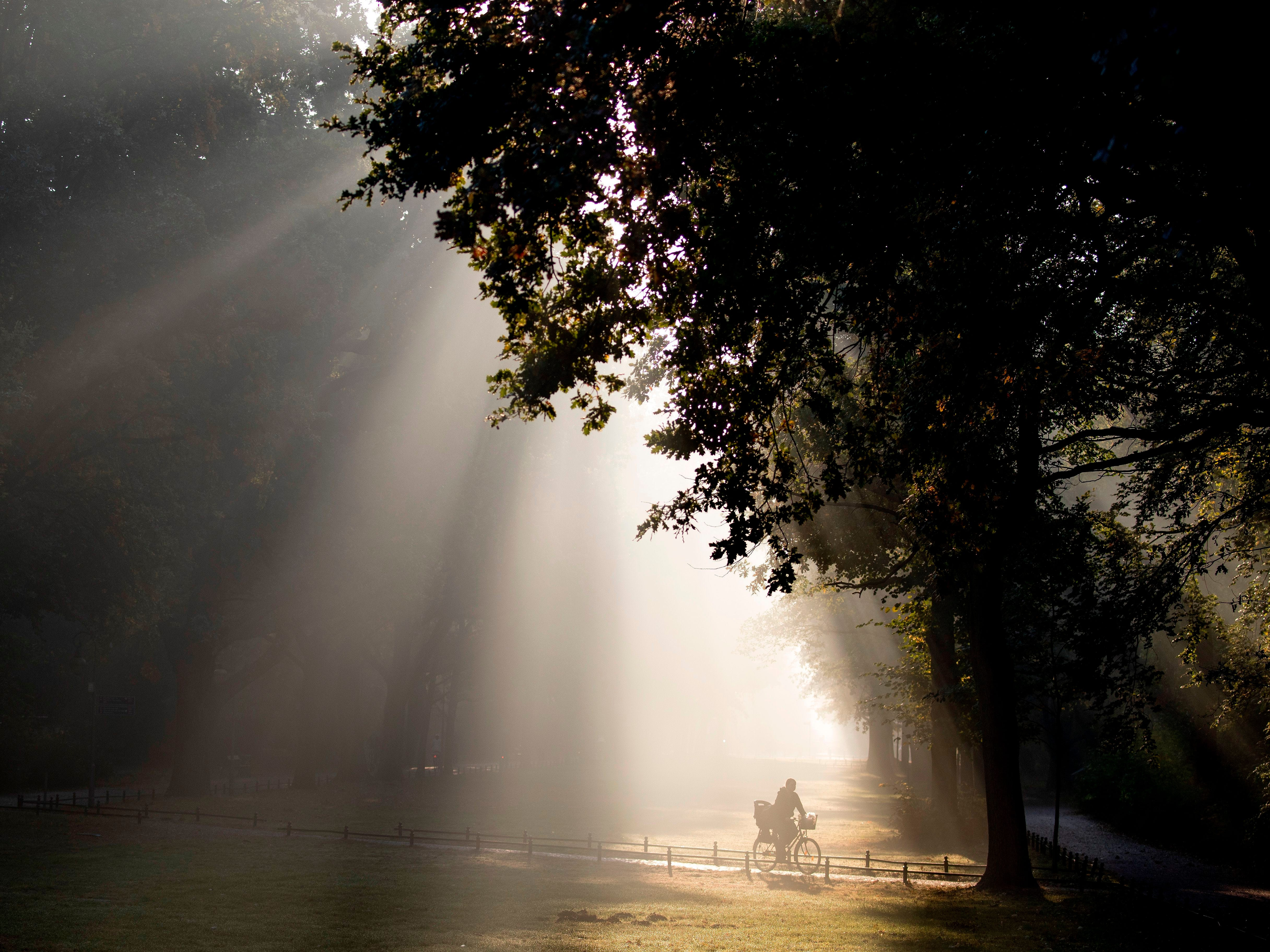 The sun cuts through the morning fog as a commuter on a bicycle makes his way through the Tiergarten park in Berlin on Oct. 10, 2018.