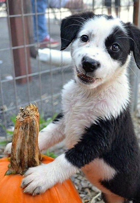 Elm 1107 Animal Shelter