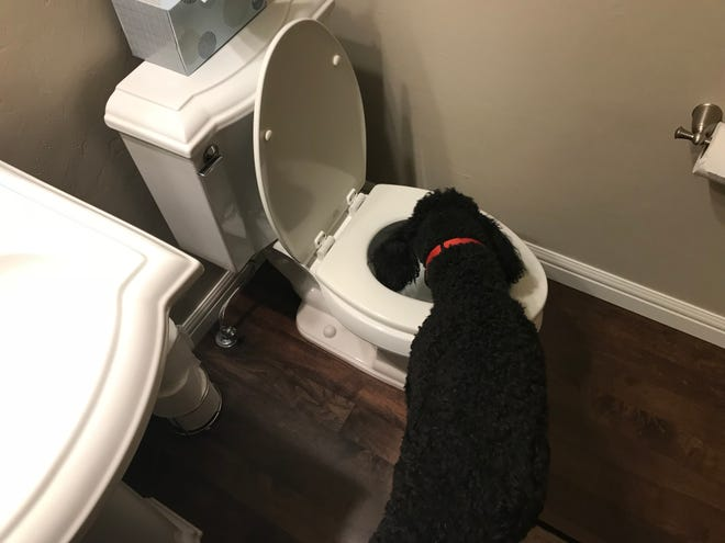 A homeowner's dog helped them discover their toilet was flushing hot water. Is the builder responsible for fixing the error?