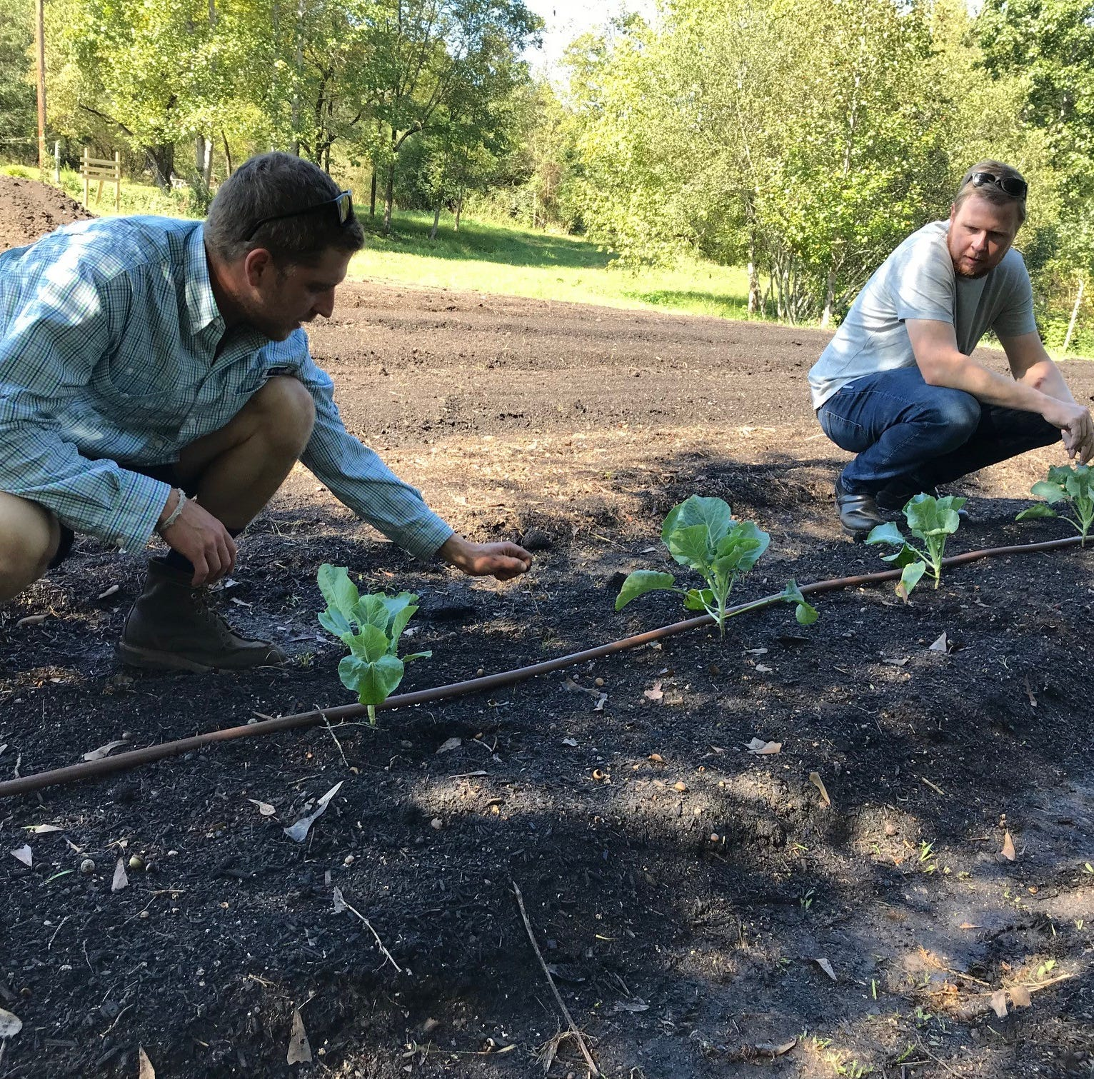 Anchorage chef and a farmer start a farm in a new approach to local food in Greenville