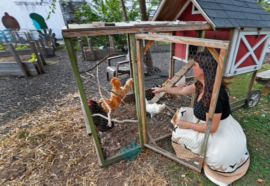 Shauta Marsh visits with her chickens, Tuesday, Oct. 9, 2018, at the site where the new Chicken Chapel of Love will be built.  The Vegas-style wedding chapel in the backyard of the Tube Factory Artspace will be complete with chickens.  You can bring your own minister or ask one of the ordained Big Car staff to officiate.  The chapel also will be a meditation center that connect the art world to the earth.  Also on the site are a bee sanctuary, raised gardens, and chicken coops.