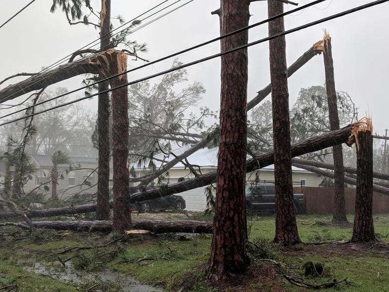 Pine trees litter a yard in Port St. Joe, Fla., on Garrison Avenue on Wednesday, Oct. 10, 2018, after Hurricane Michael made landfall in the Florida Panhandle. Hurricane Michael formed off the coast of Cuba carrying major Category 4 landfall in the Florida Panhandle. Surge in the Big Bend area, along with catastrophic winds at 155mph.