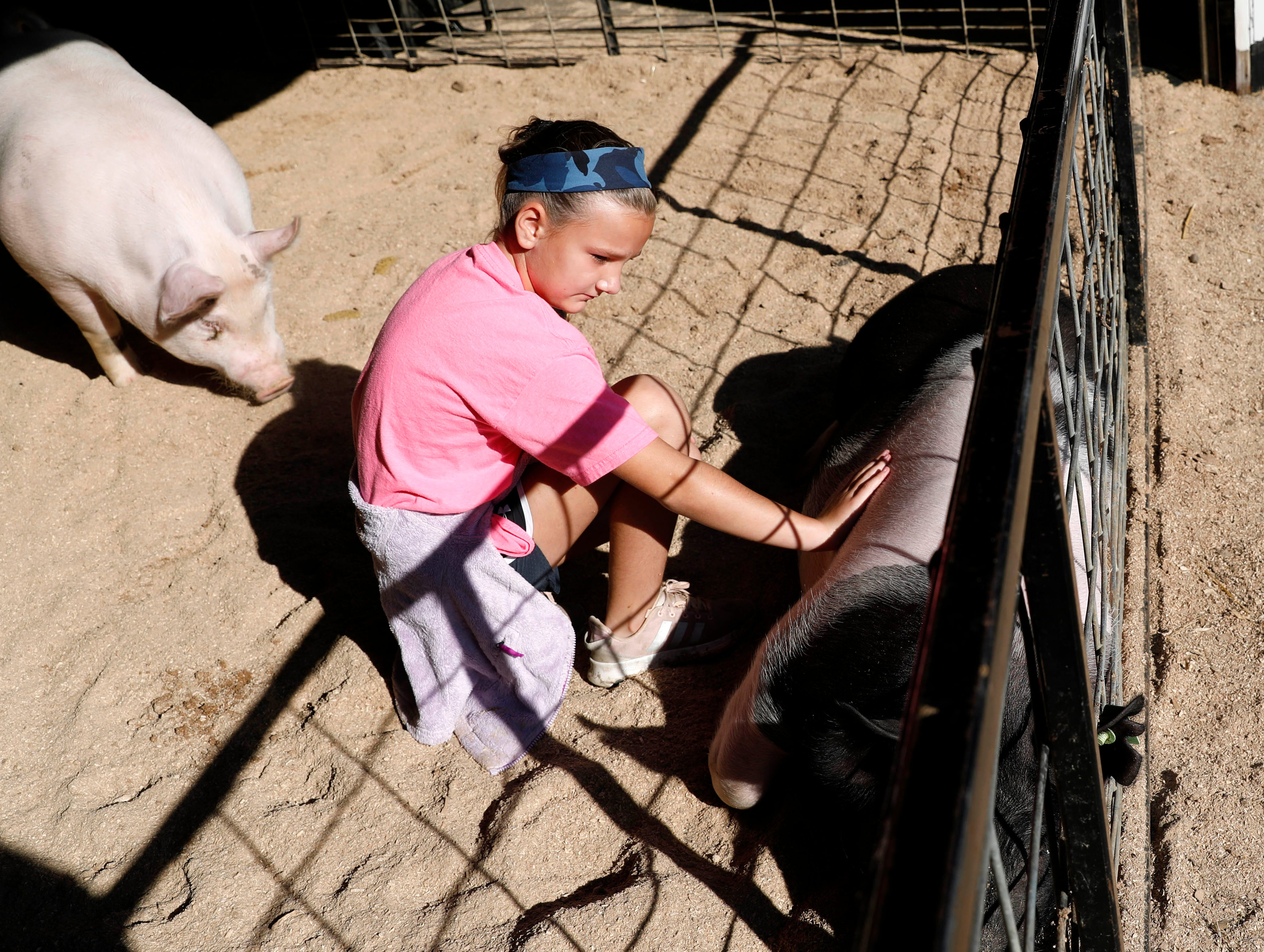 Brinleigh Hoisington, 9, from Baltimore, pets her pig Patches as her brother's pig Lucky sneaks up behind her Wendesday, Oct. 10, 2018, in the swine barn at the Fairfield County Fair in Lancaster.