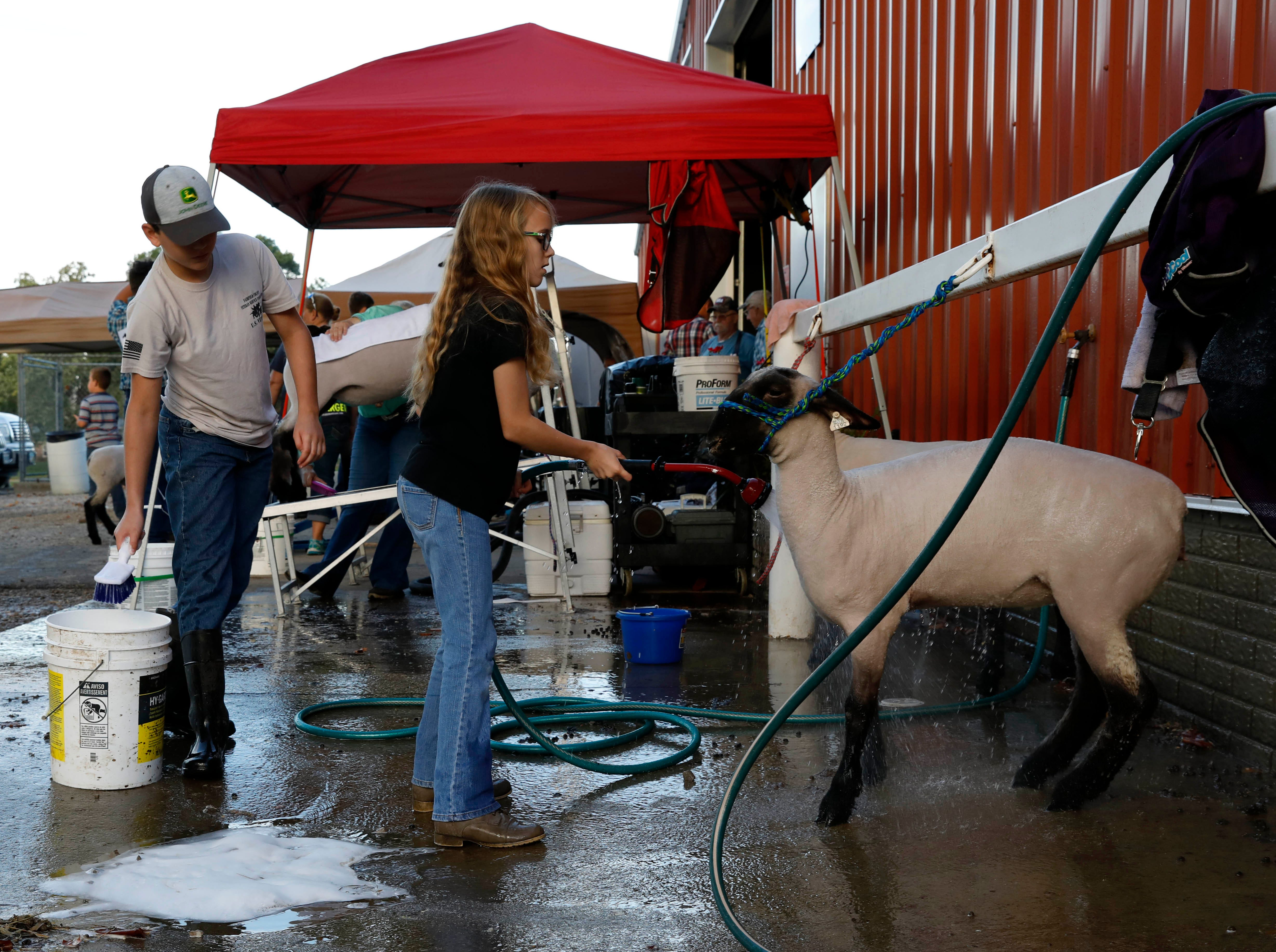 Zachary Berry, 11, from Pleasantville, and his sister Olivia Berry, 13, prepare their sheep Jay and Abby for Wednesday's sheep show, Oct. 10, 2018, at the Fairfield County Fair in Lancaster.