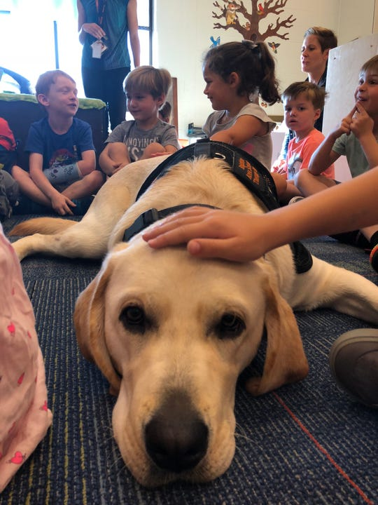 Children in Melissa Bridson's junior kindergarten class at Hawkins Elementary in Brighton pet Scout, the school's therapy dog. The district plans to have a dog in every building by next spring.