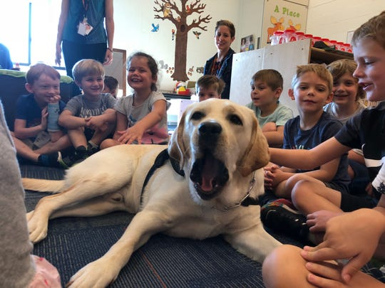 Scout, a Brighton Schools therapy dog, yawns while at work in Melissa Bridson's junior kindergarten classroom at Hawkins Elementary.