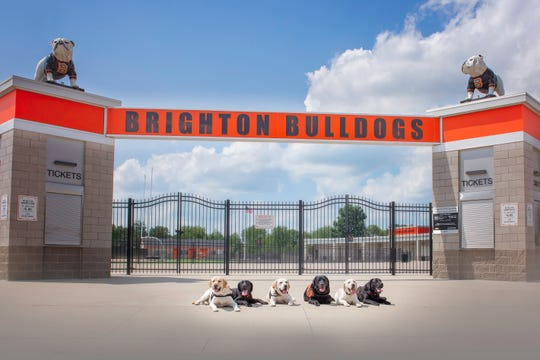 The labrador retrievers owned by Brighton Schools. Caesar, Duncan and Scout will soon be joined by Shadow, Ford and Buckley on the district's mission to have a dog in every building.