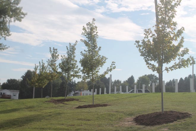 Autumn blaze maple trees were recently planted at Mishicot Village Park.